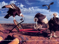 shimano_components_guts_vultures